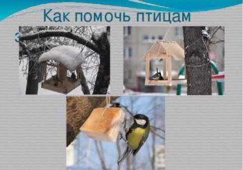 Как помочь птицам в непогоду